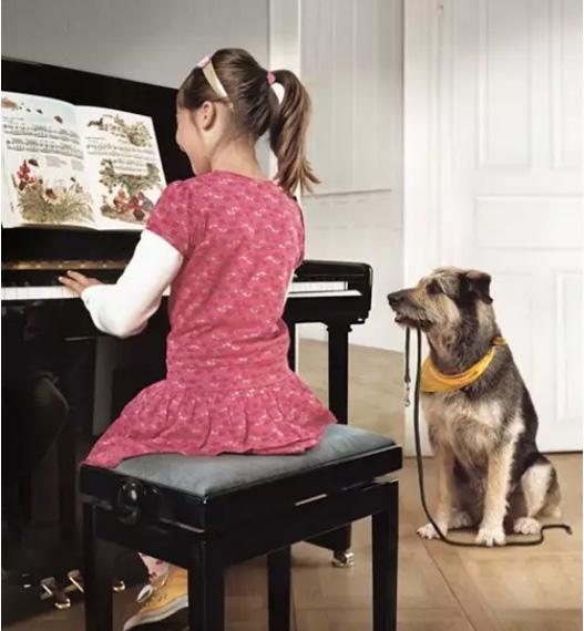 学琴能坚持到最后,不靠天赋也不兴趣,到底靠什么?